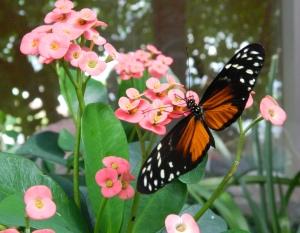 butterflypinkflow