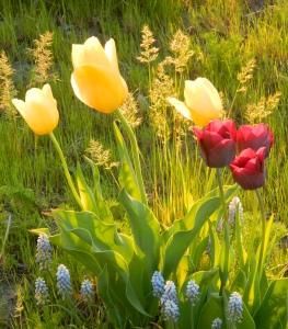 cutflowers
