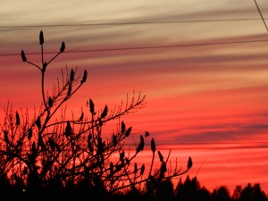 February2014 sunset 104