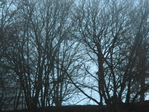 ridgeline trees