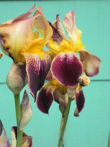 twoflowers014028