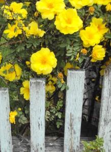 yellowfence