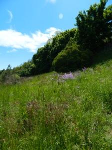 Spring 2012 082