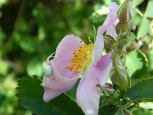 Spring 2012 091