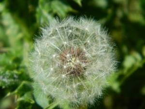 Spring 2012 105