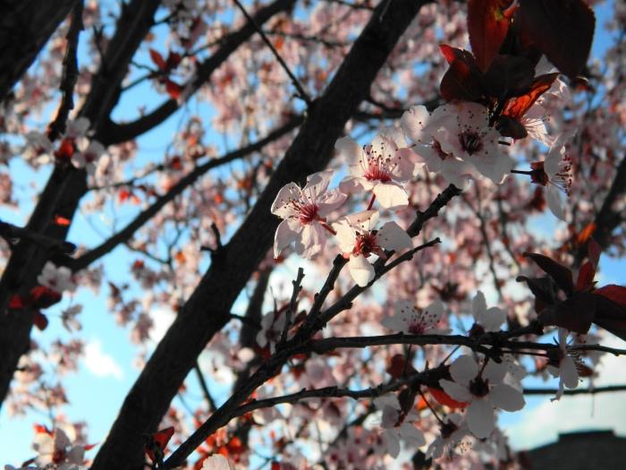blossomsinsun