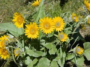 Kamiah Butte April 072