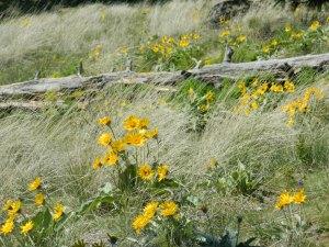 Kamiah Butte April 077