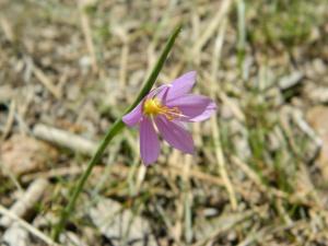 Kamiah Butte April 101