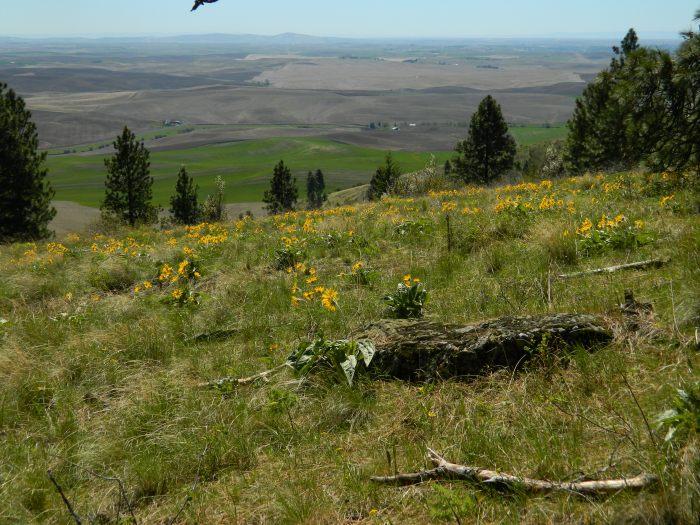 Kamiah Butte April 127