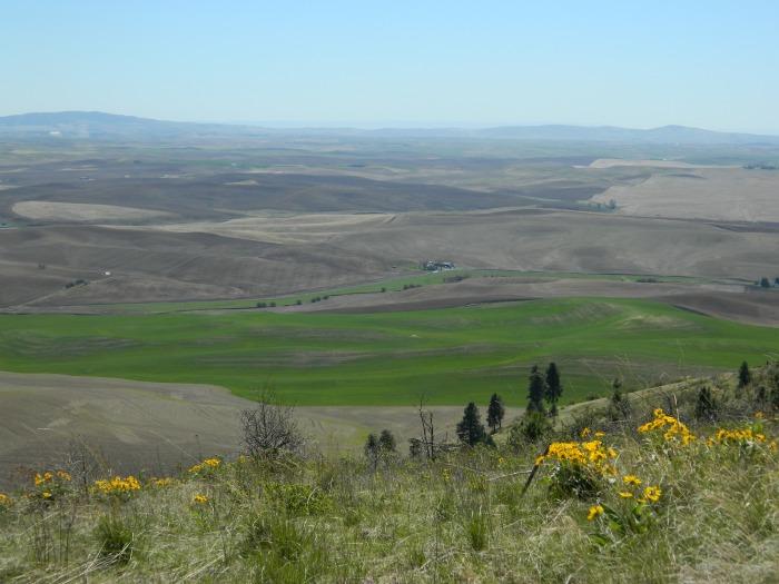 Kamiah Butte April 146