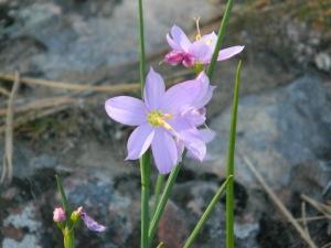 Kamiah Butte April 182