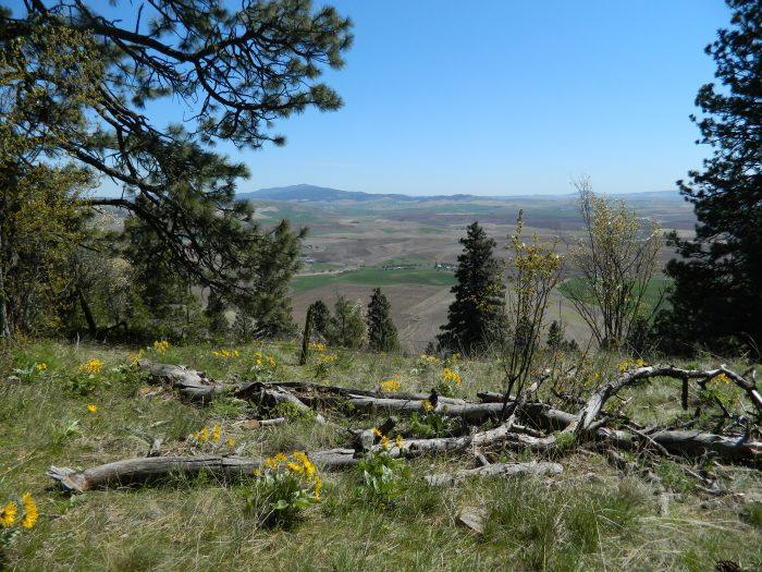 Kamiah Butte April 191