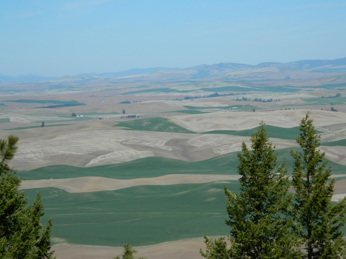 Kamiah Butte April 239