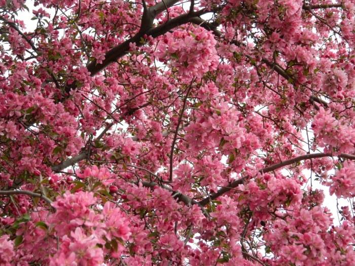Seattle April 242