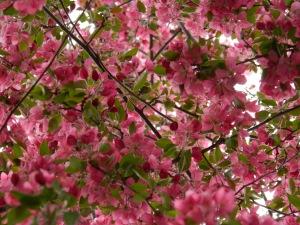 Seattle April 246