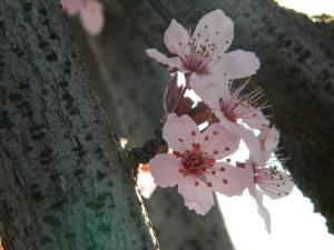 spring 012