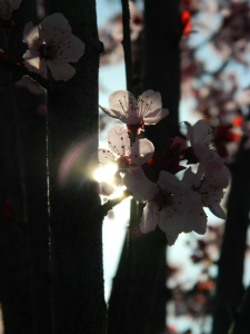 spring 016