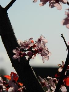 spring 019