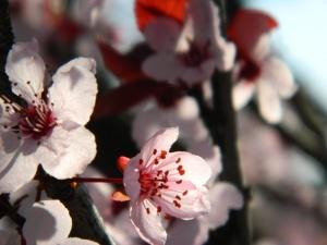 spring 036