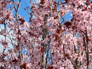 spring 039