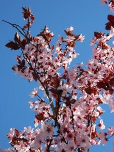 spring 041