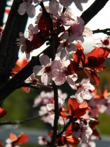 spring 045