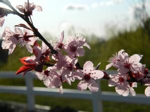 spring 057