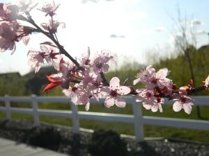 spring 059