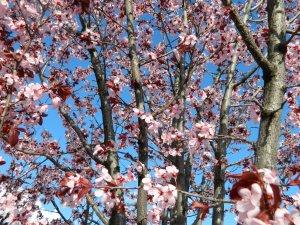 spring 062