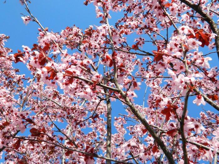 spring 063