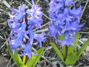 spring 079