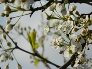 spring 089