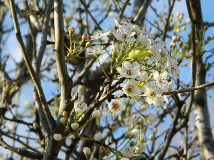 spring 090