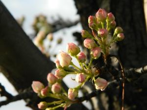 spring 092