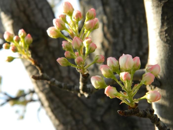 spring 093