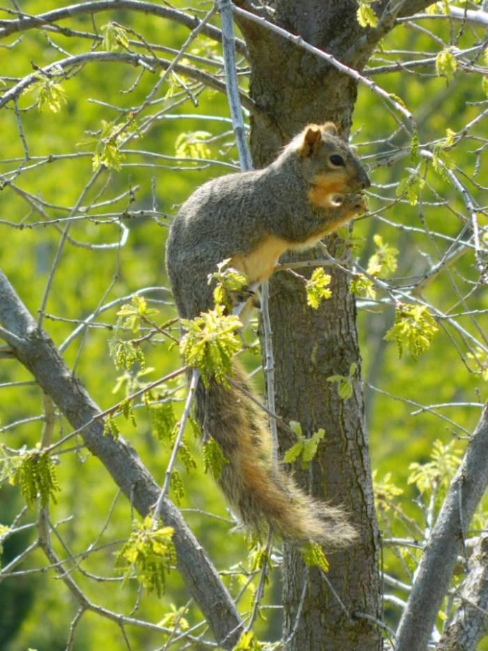 0031squirrel