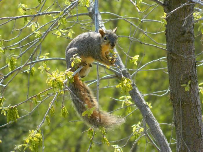 0033squirrel