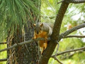 0040squirrel2