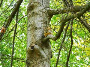 0041squirrel2