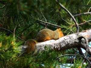 0042squirrel2