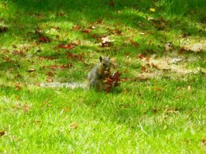 0043squirrel2