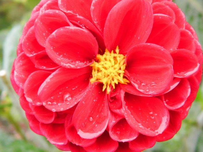 0004Green Lake Flowers