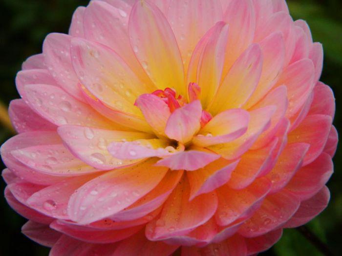 0008Green Lake Flowers